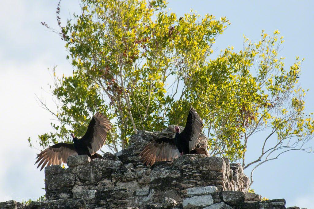 Abutres, Cobá, Quintana Roo, México
