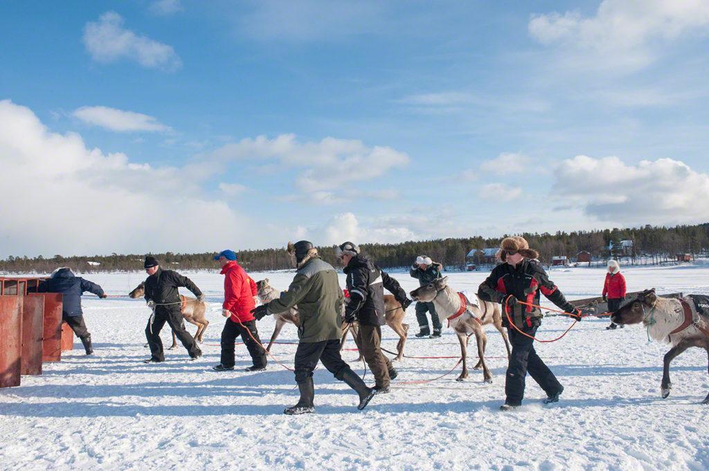 Donos puxam renas, Kings Cup Porokuninkuusajot, Inari, Finlândia