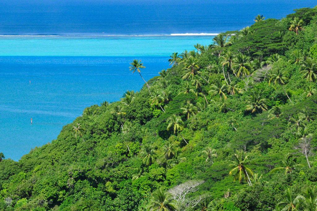 Encosta tropical, coqueiros, vegetação, Maupiti, Ilhas sociedade, Polinesia Francesa