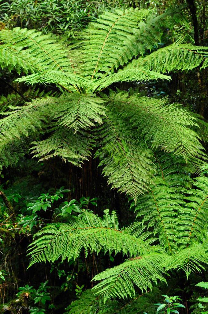 Feto, Fiordland National Park, Nova Zelândia
