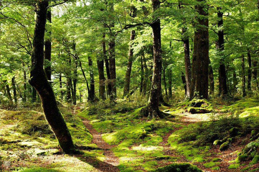 Floresta, Fiordland National Park, Nova Zelândia