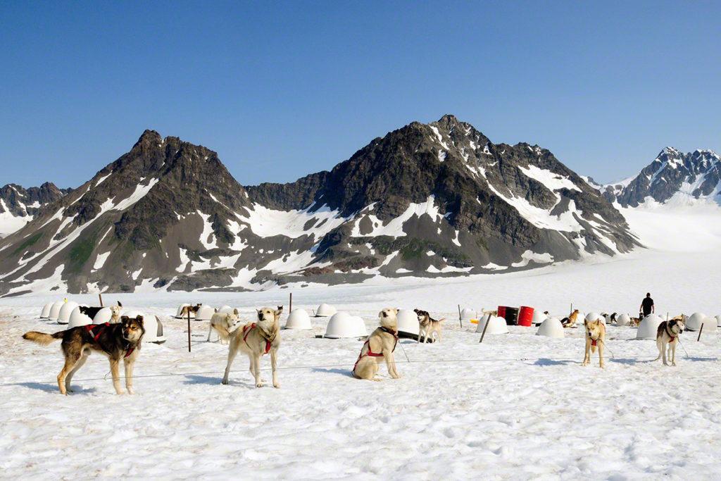 Matilha de cães, acampamento Godwin, Seward, Alasca