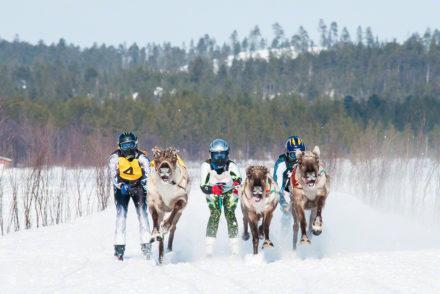 Corrida de Renas , Kings Cup, Inari, Finlândia