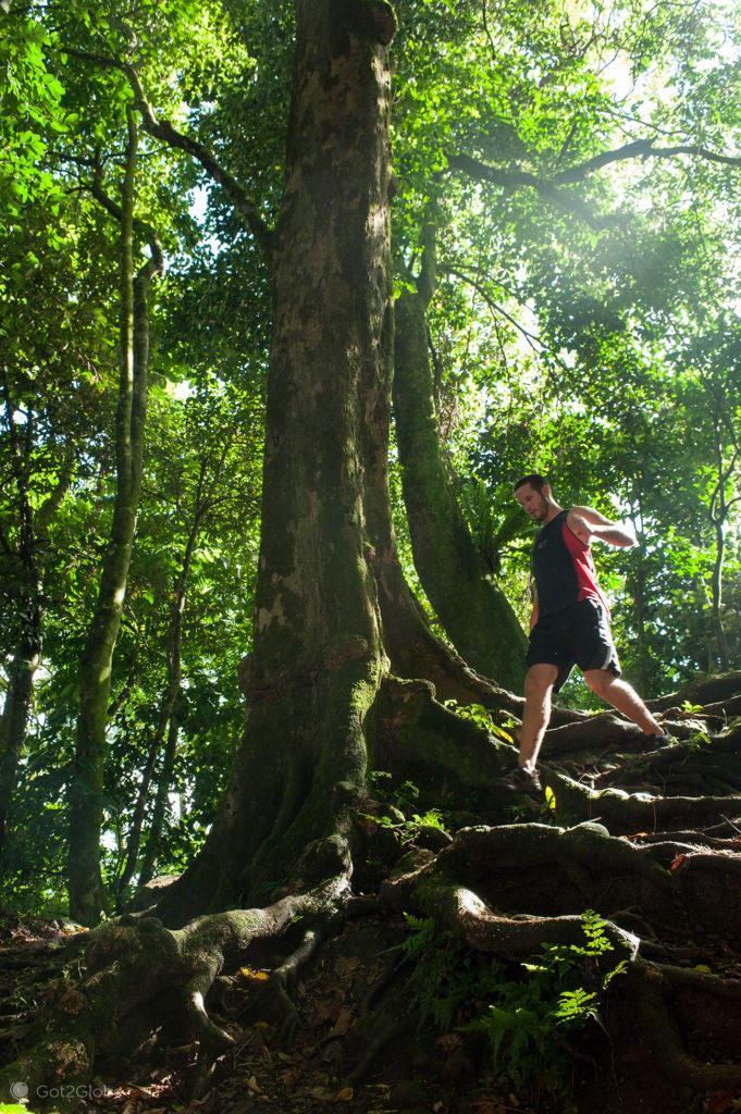 descida monte Vaea, jogging, vila vailima, Robert Louis Stevenson, Upolu, Samoa