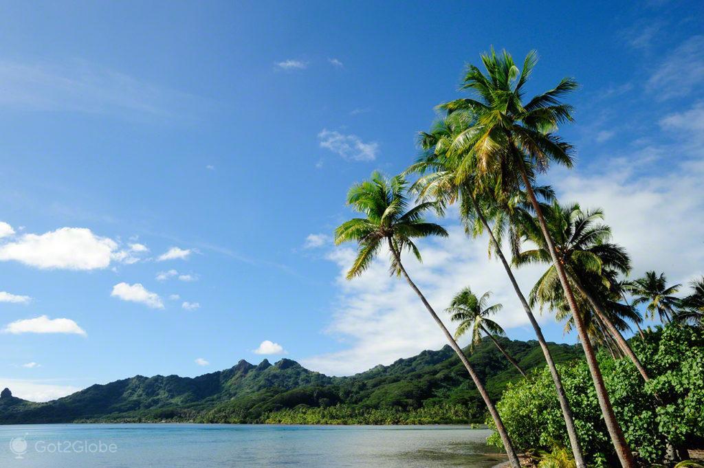 litoral tropical, coqueiros, Maupiti, Ilhas sociedade, Polinesia Francesa