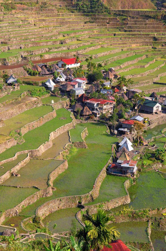 aldeia, pormenor, socalcos arroz, batad, filipinas
