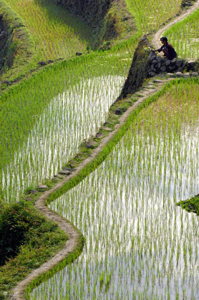 campones, descanso, socalcos arroz, batad, filipinas