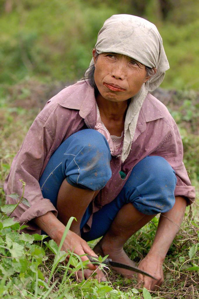 camponesa, trabalho, erva daninha, socalcos arroz, batad, filipinas