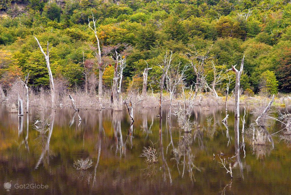 Comboio do Fim do Mundo, Terra do Fogo, pântano na Baía Lapataia, Argentina