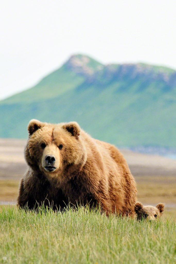 femea, cria, ursos, passos grizzly, parque nacional katmai, alasca
