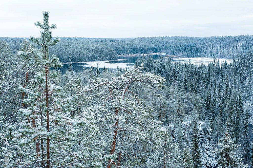 floresta, semi gelada, parque nacional oulanka, finlandia