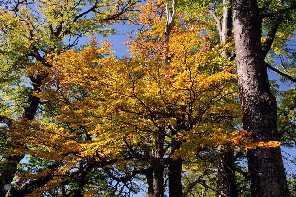 folhas outono, monte fitz roy, argentina