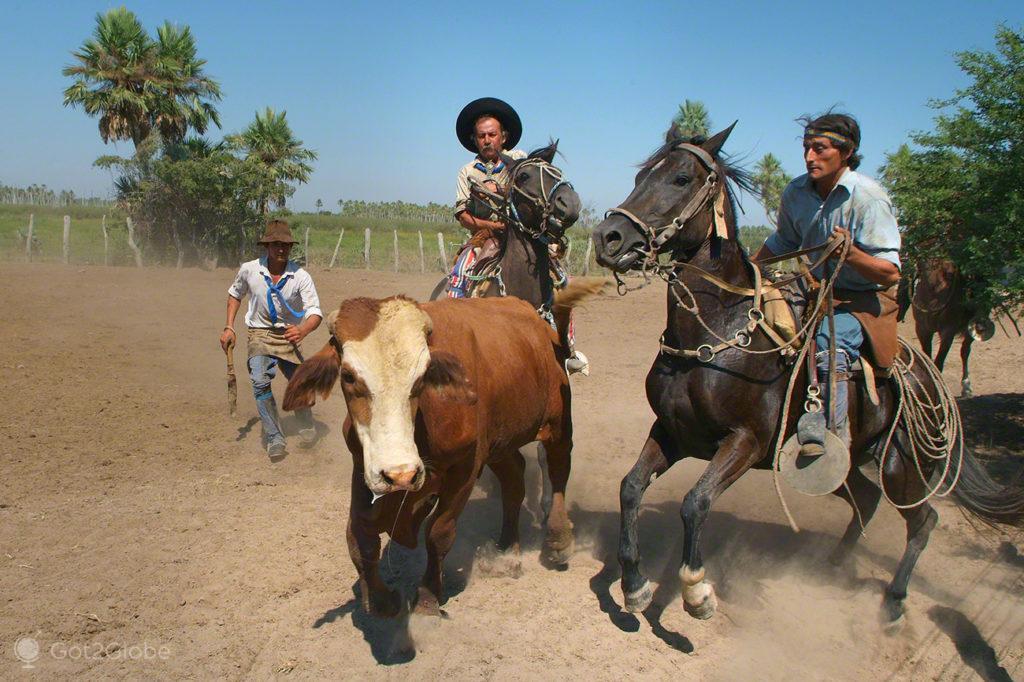 gauchos, febre aftosa, carne fraca, colonia pellegrini, argentina