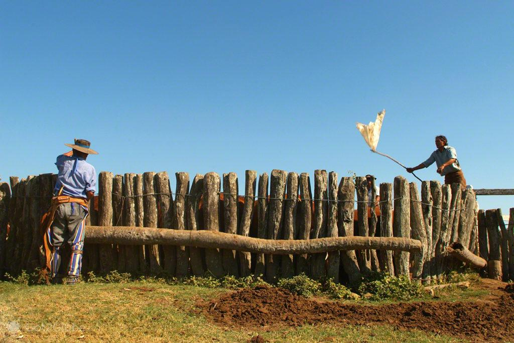 gauchos incitam vacas, febre aftosa, carne fraca, colonia pellegrini, argentina