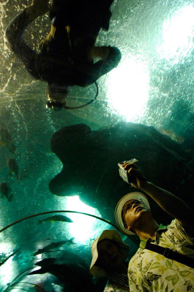 Ilha Sentosa, Singapura, casal oceanário S.E.A.