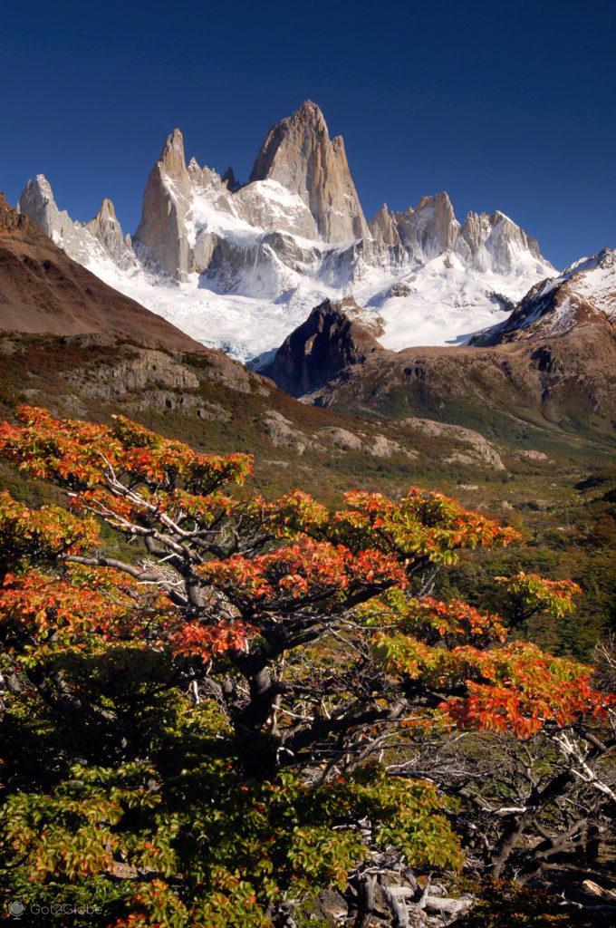 vegetacao outonal, monte fitz roy, argentina