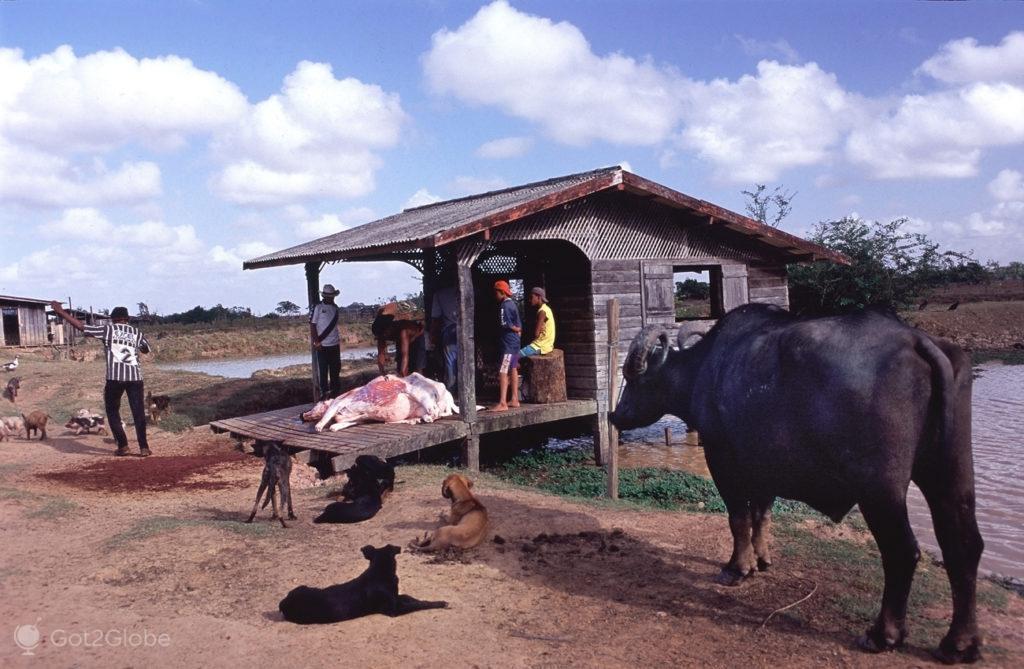 Bufalos, ilha do Marajo, Brasil, esquartejamento
