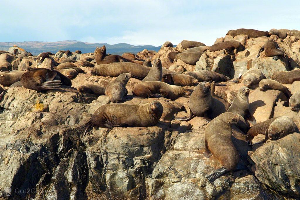 Colónia leões-marinhos, Canal Beagle, Evolucao, Darwin, Ushuaia na Terra do fogo