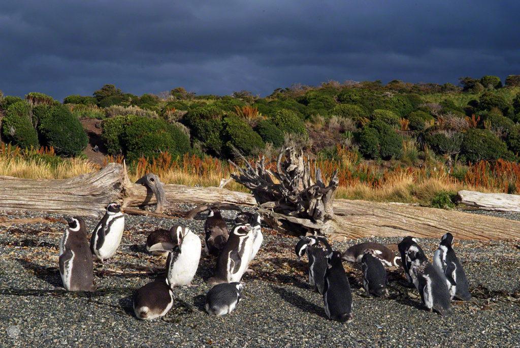 Pinguineira, Canal Beagle, Evolucao, Darwin, Ushuaia na Terra do fogo