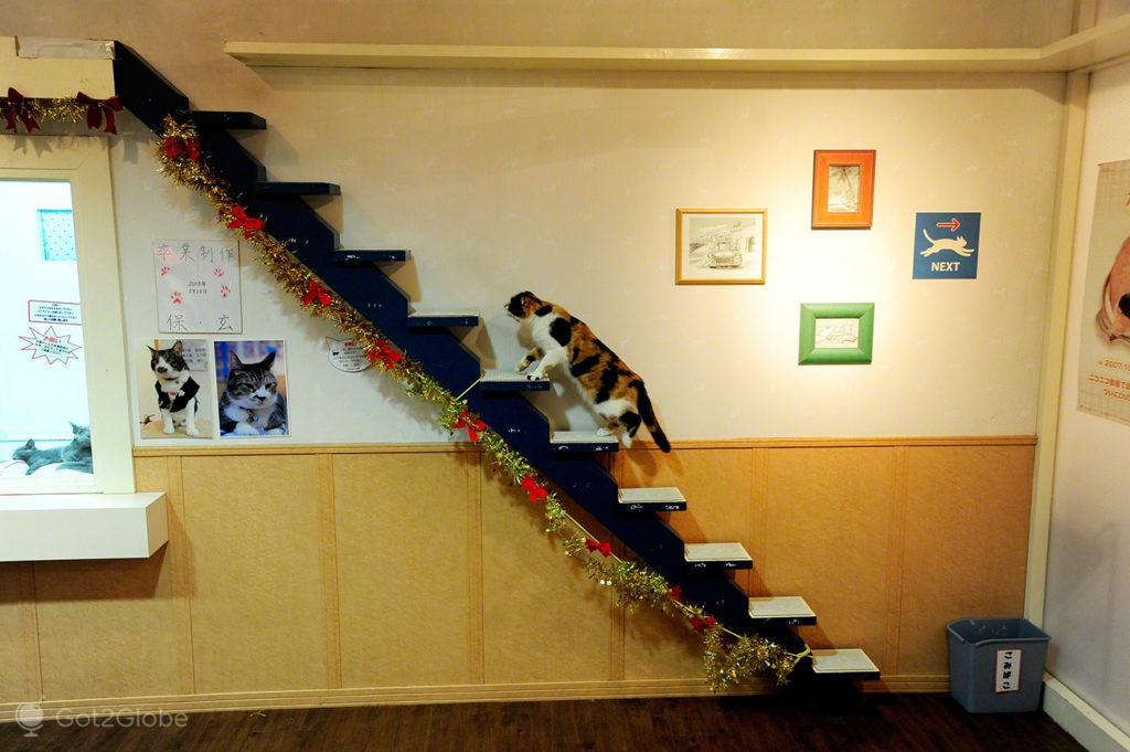 Gatis de Tóquio, Japão, escadaria