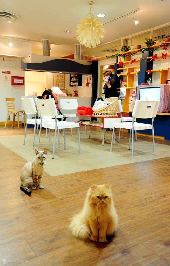 Gatis de Tóquio, Japão, gatos inquietos