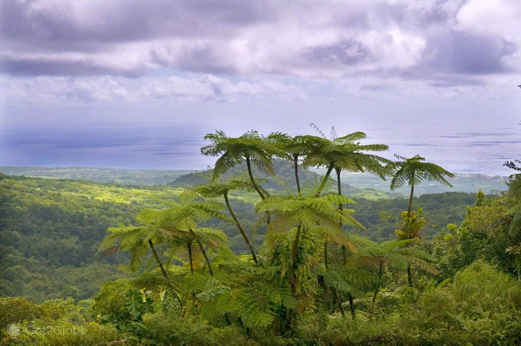 Vegetação Tropical ,Guadalupe, Caribe, Efeito Borboleta, Antilhas Francesas