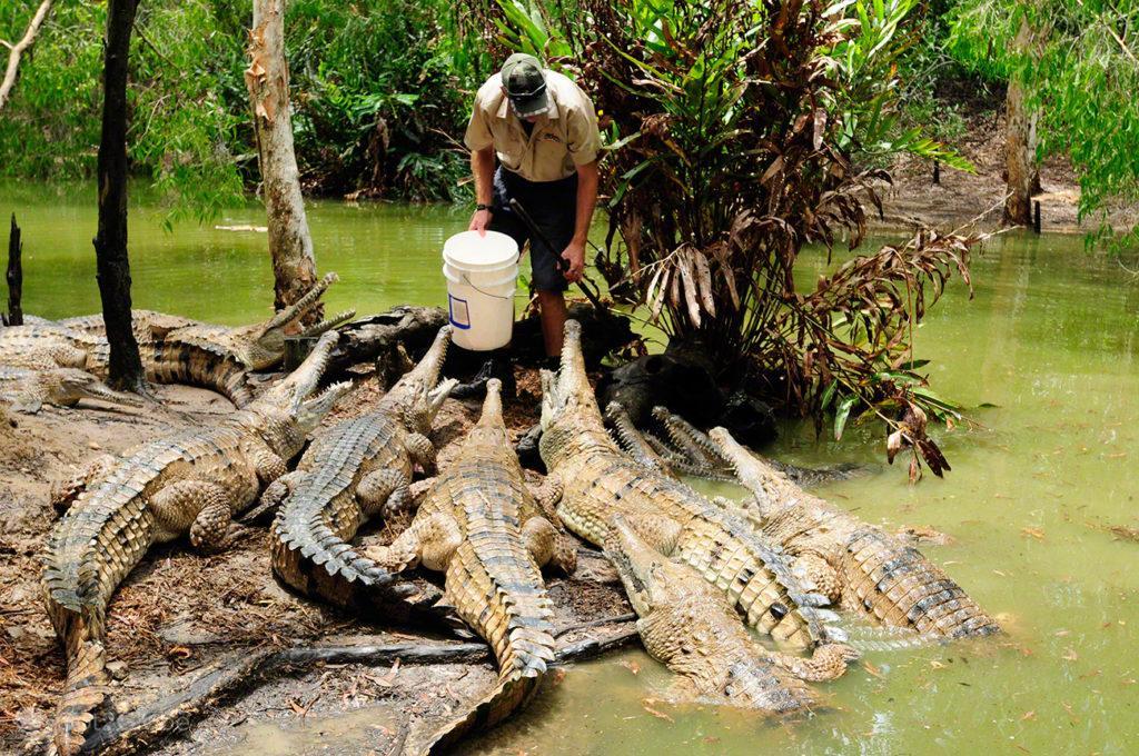 Crocodilos, Queensland Tropical Australia Selvagem