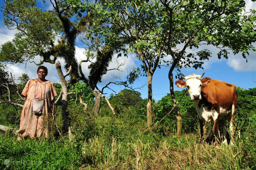 Nativa e vaca, Tanna, Vanuatu ao Ocidente, Meet the Natives