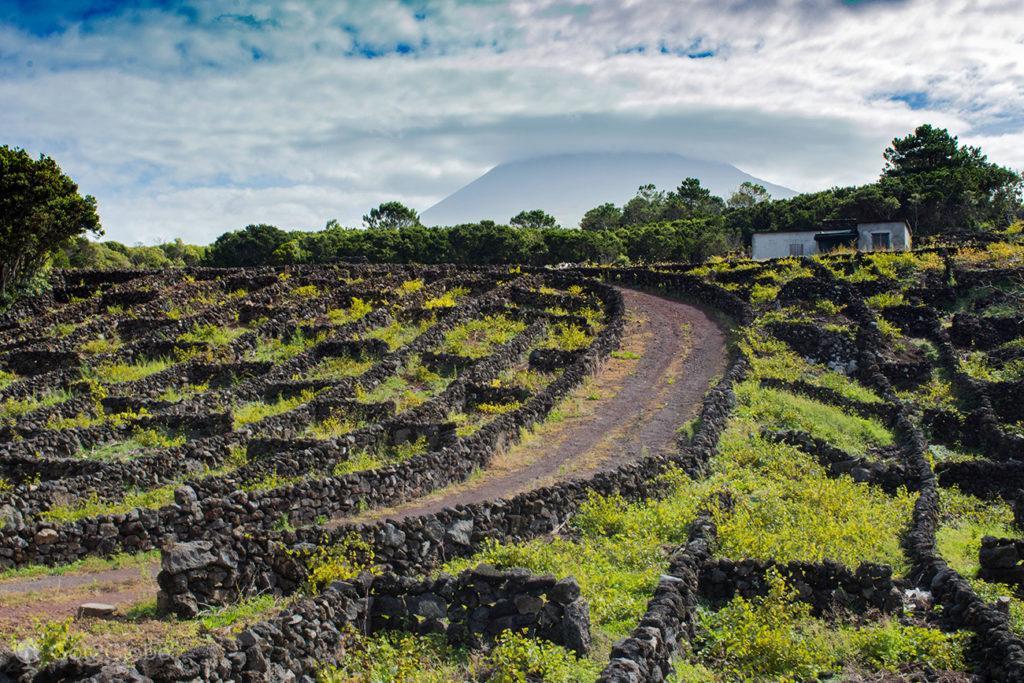 Currais, Ilha do Pico, Montanha Vulcão Açores, aos Pés do Atlântico