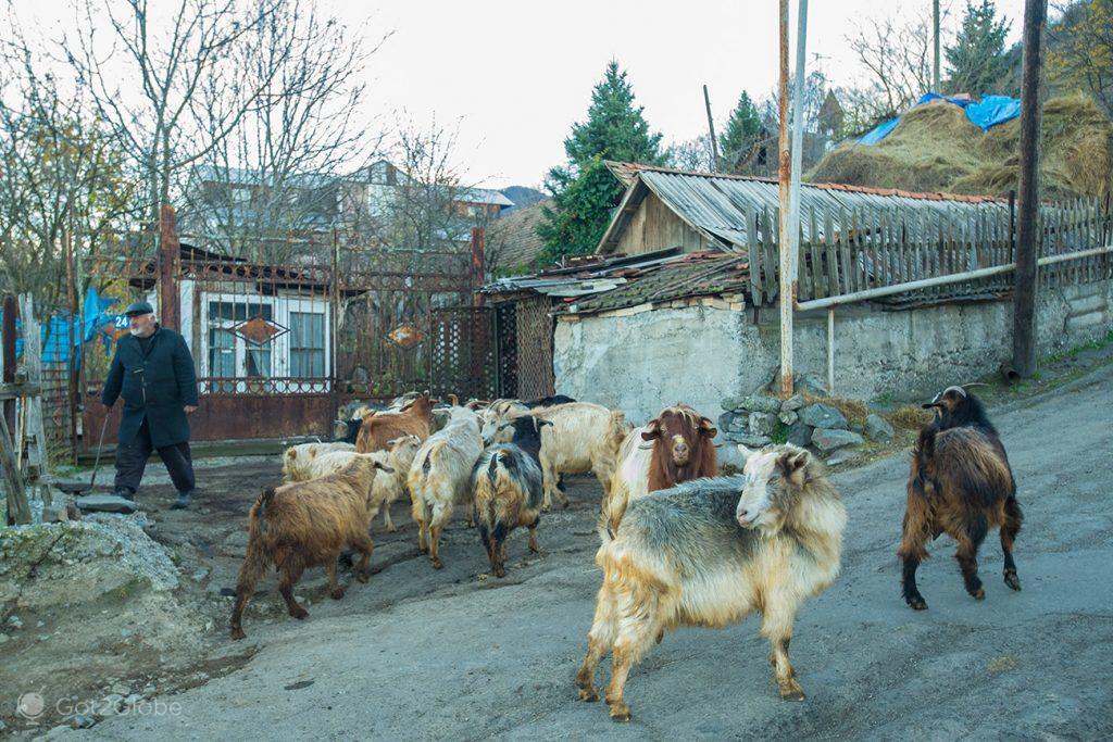 Cabras em Sanahin, Arménia