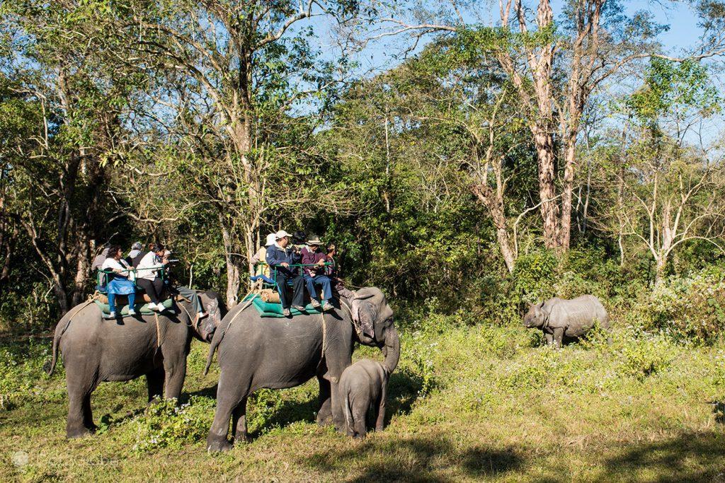 Safari de elefantes, PN Jaldapara, Bengala Ocidental, Índia