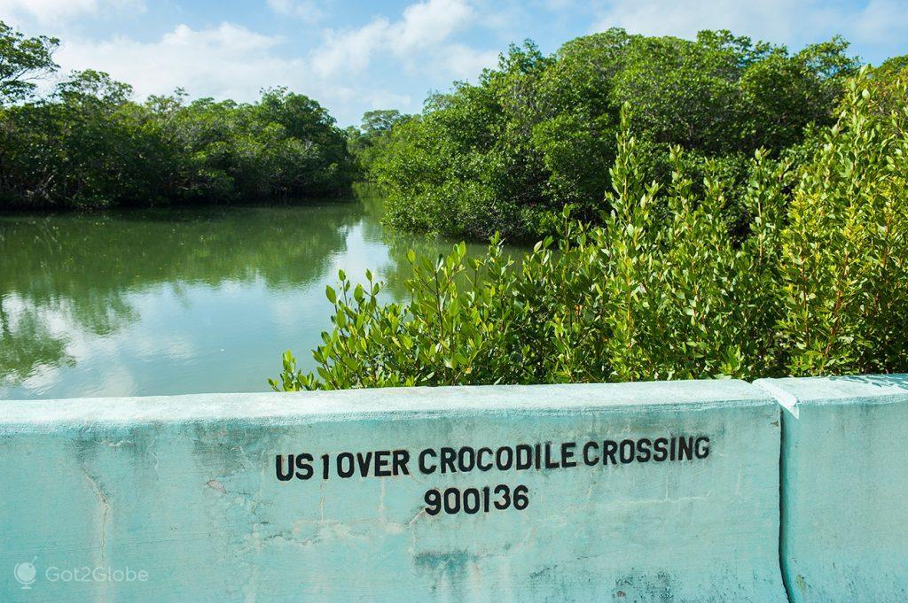 Crocodile Crossing, junto ao Pelican Cay RV park, Florida Keys, Estados Unidos da América