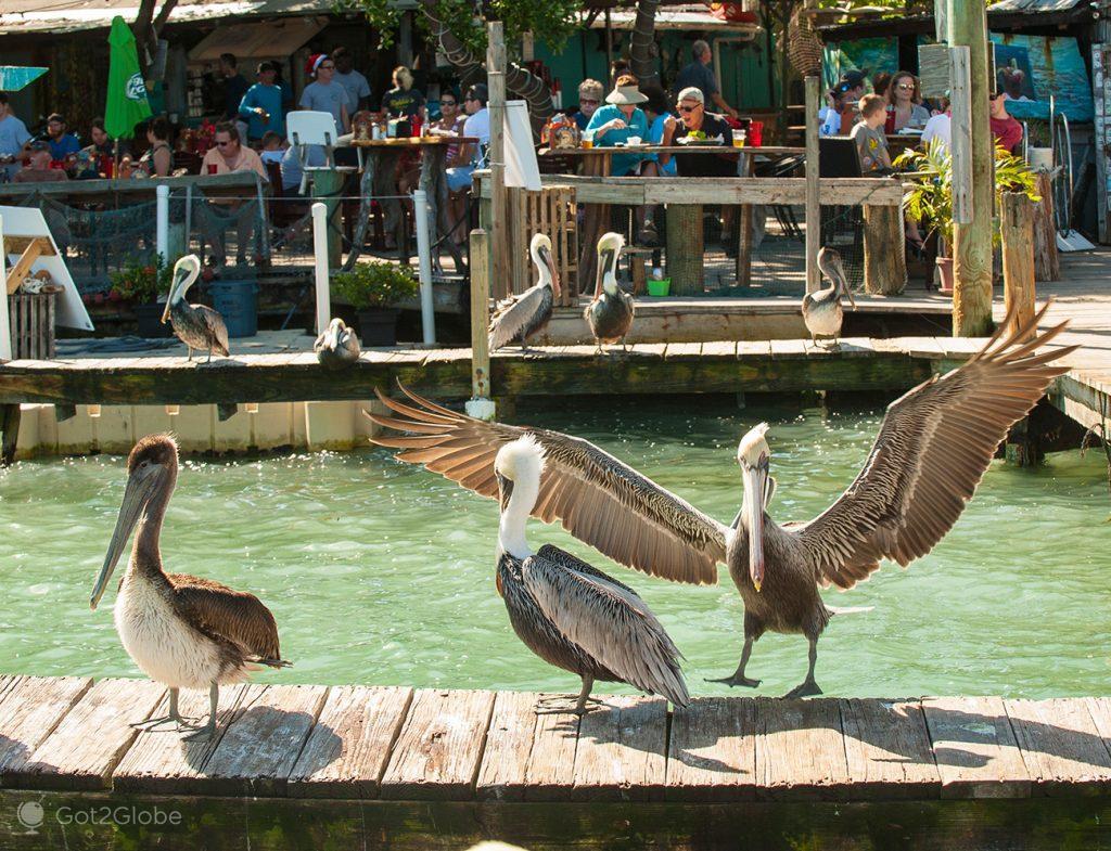 embarcadouro de Matecumbe Key, Florida Keys, Estados Unidos da América