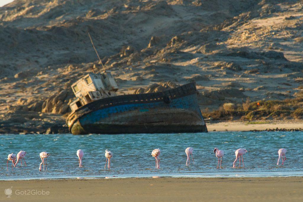 Flamingos nos arredores de Luderitz, Namibia
