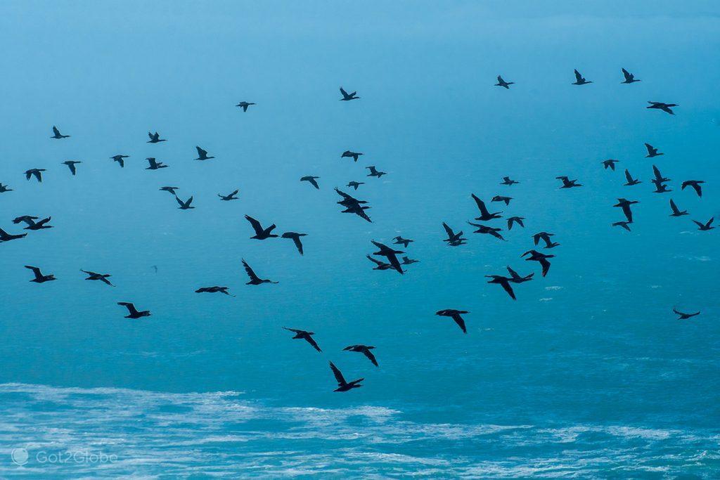 Mergulhões voam sobre o padrão de Bartolomeu Dias, Luderitz, Namibia