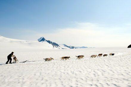 Pleno Dog Mushing