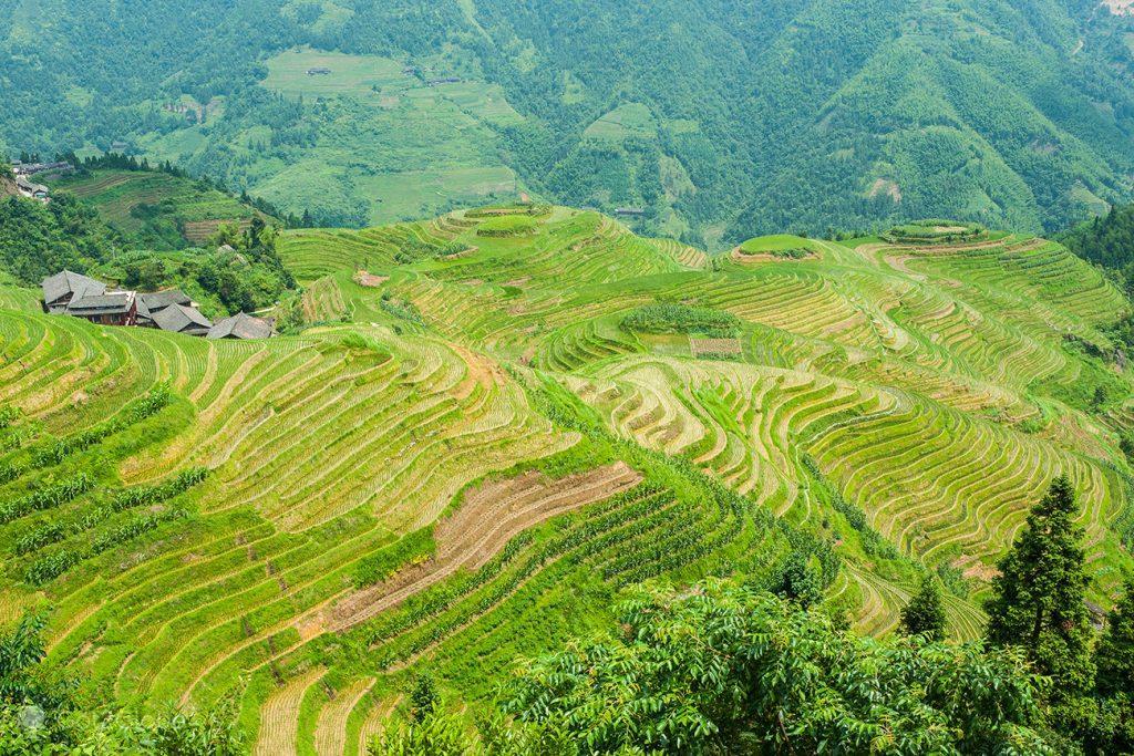 Terraços de Arroz de Longsheng, Guangxi, China