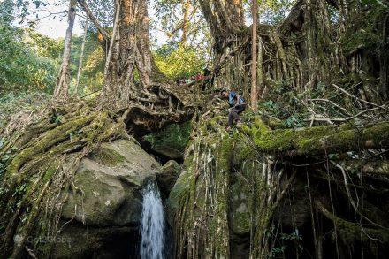 Jingkieng Wahsurah, ponte de raízes da aldeia de Nongblai, Meghalaya, Índia