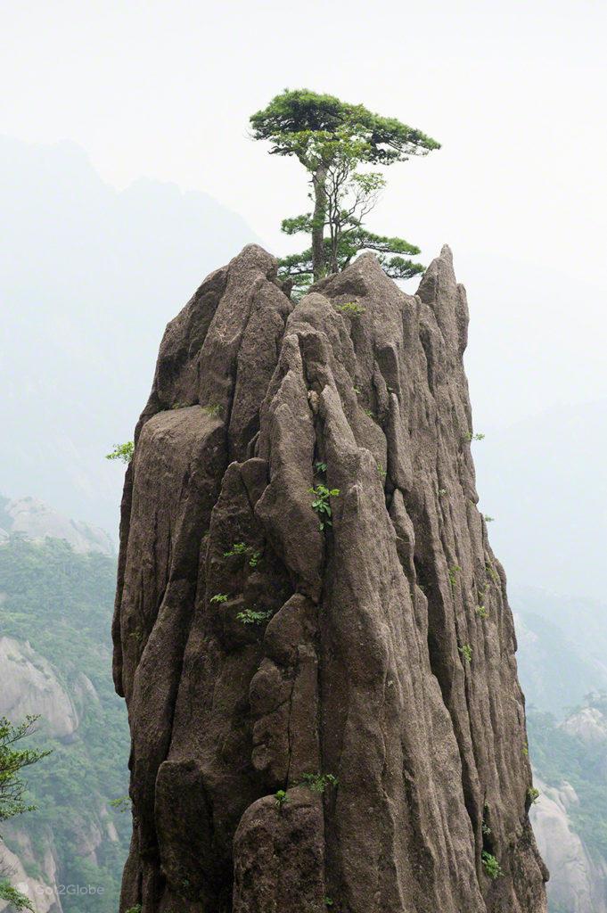 Pinheiro cume, Huang Shan, China, Anhui, Montanha Amarela dos Picos Flutuantes