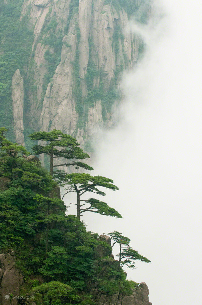 Pinheiros de Huang Shan, Huang Shan, China, Anhui, Montanha Amarela dos Picos Flutuantes