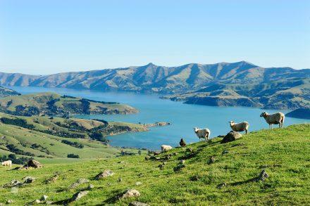 Península Banks, Akaroa, Canterbury, Nova Zelândia