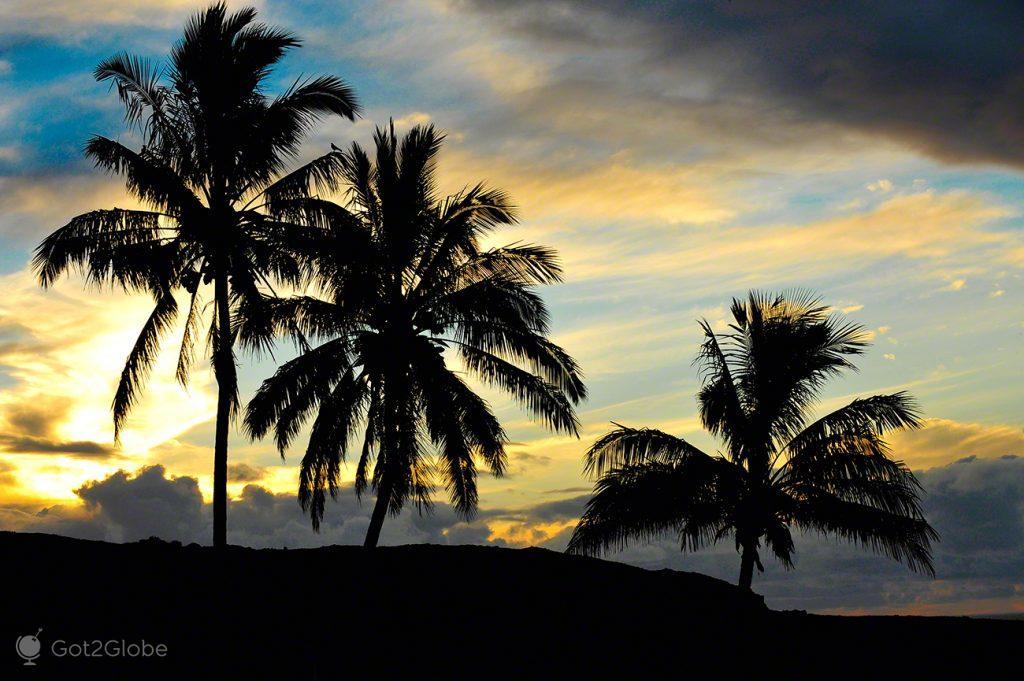 Derradeiras palmeiras, Ilha Pascoa, Rapa Nui, Chile