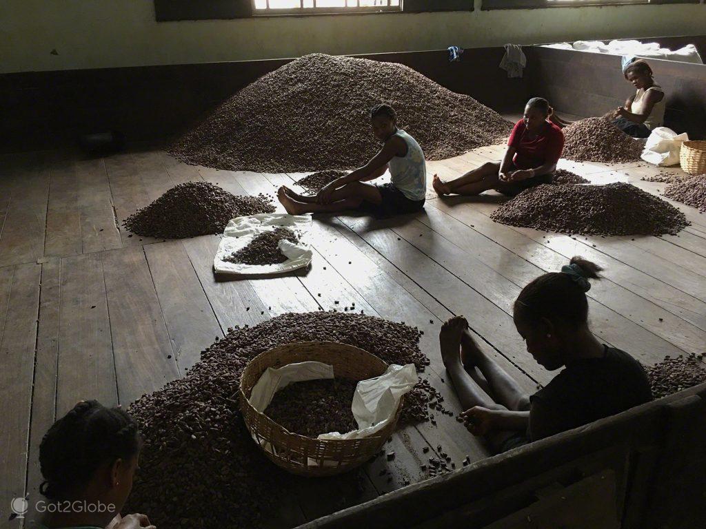 Cacau, Chocolate, Sao Tome Principe, roça Agostinho Neto