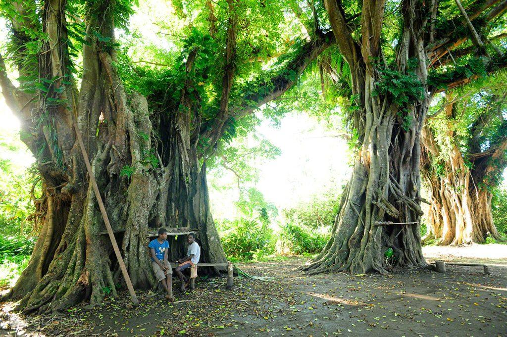 Nakamal, Tanna, Vanuatu ao Ocidente, Meet the Natives