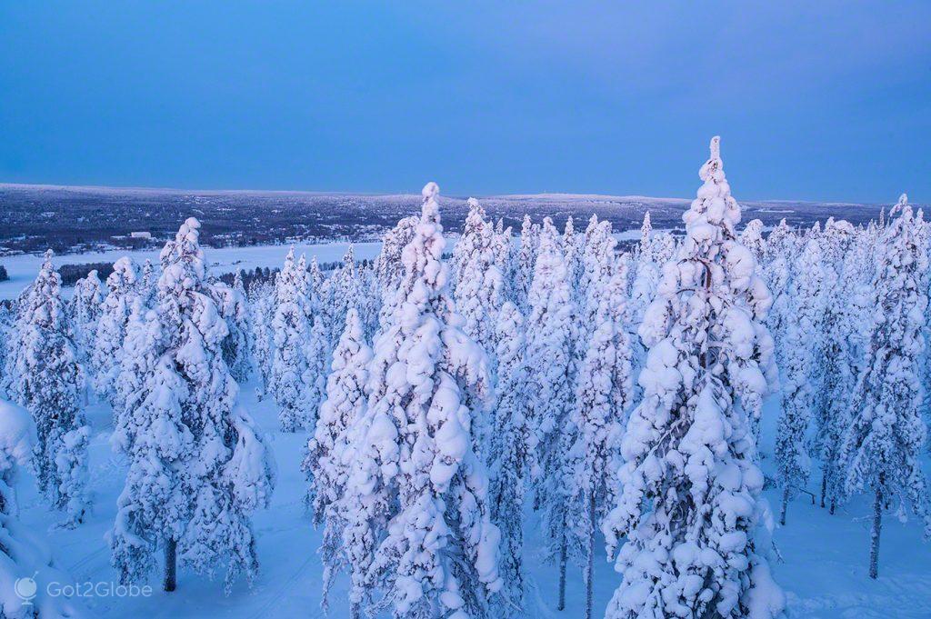 Coníferas nevadas, Ounasvaara, Rovaniemi, Finlandia