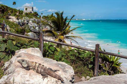 Iguana em Tulum, Quintana Roo, México