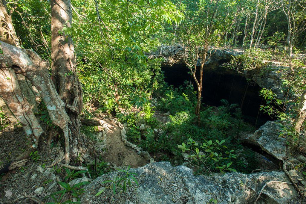 Fractura agora verdejante na superfície de calcário da península de Iucatão
