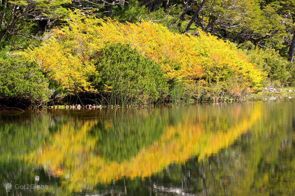 Reflexo de vegetação outonal, no PN Huerquehue, Pucón, La Araucania, Chile