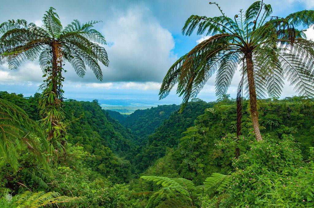 Fetos e vereda luxuriante, Upolu, Samoa Ocidental