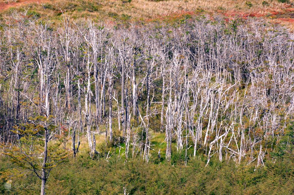Pequena floresta morta